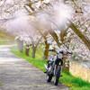 吉川で桜撮影 #桜CLさん