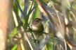 今秋の河川敷の鳥たち