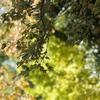 明保野公園とイチョウ並木