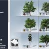 Desktop Trees Package 葉や枝、細部の作り込みが凄いSpeedTree製の「木」の3Dモデルパック