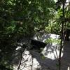 ピアノは魔法🎹 / 仙川の森