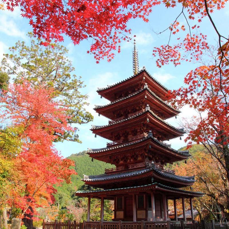 【2019秋】海住山寺で文化財特別公開!紅葉狩りをしながら古寺探訪はいかが?