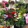 花やで始まる恋模様~携帯を拾って~