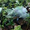 クモの巣 出店のためのパン製造