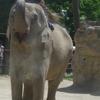 【写真】夏の上野動物園