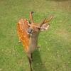鹿プラセンタはエイジングケアに効果がある?