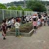 2年生:生活 サツマイモを植える