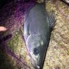 アジング釣行記録〜5分で3魚種 7個体