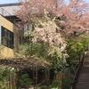奈良 ナラマチで見かけた桜の木