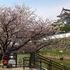 岸和田城と桜と