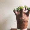パキポディウム・グラキリス的エケベリア鉢