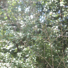 """【ひとり写真部】「生きるって美しい。」春の植物に、シンプルな""""生""""の本質を見た。"""
