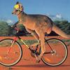 留学で自転車?アデレードでチャリを勧める4つの理由。