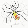 香川県の住宅地にはジョロウグモが多い?なぜ?
