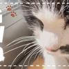 【日向ぼっこが気持ちよくてまどろんでいるおばあちゃん猫 | BGM編 #43】