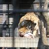 動物が近い!よく動く!改装なった京都市動物園