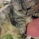 猫と昼寝と芸術家