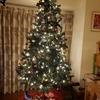 サンタさんからのクリスマスプレゼント★早朝からワクワクの姉弟