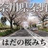【動画】神奈川県秦野市 はだの桜みち