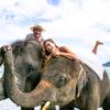 とっても象さん日和