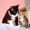 ヨングクの飼い猫トルビ&ルシの画像てんこ盛り祭り