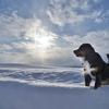 僕は雪原を駆け回るのが仕事!