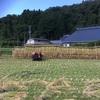2019立花の稲刈りイベント