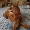 猫草を庭の荒れ果てた花壇で栽培するぞ!猫が猫草を思う存分食べれる環境を目指します