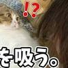 猫を吸い..猫を舐める女
