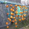 干し柿作りとタイヤ交換