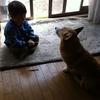 犬と話せると日々楽しくすごせるだろうな