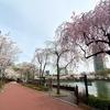 ソウルの桜名所!春のソクチョンホス