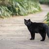 寝るネコ、散歩するネコ、闊歩するネコ