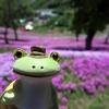 フーテンのケロさん*滝上芝桜の旅