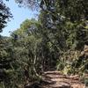 11/6・秋のルーミスシジミを目指して渓谷あるき 〜 出会いはあったものの目の前には降りてくれませんでした