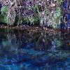 森の奥でひっそりと湧き出る 男池湧水(おいけゆうすい)