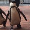 ペンギンが想像以上に凄い件について