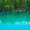 写真映えする光景がたくさん!美瑛町「青い池」と「白金温泉」が絶景だった