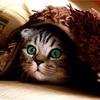 猫の手術からまさかの膿が!?熱と貧血の原因が判明しました!
