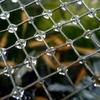 金網の水滴