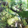 伊豆シャボテン公園は、子どもの頃の図鑑の世界だった / 伊豆旅行記4
