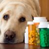 獣医さんのおすすめ!ペットに薬を与えるなら、ふかし芋で包めば簡単