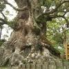 日本一の大木のある武家屋敷町~姶良市蒲生