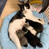血の繋がりなんて関係ない、孤児の子猫たちを我が子のように受け入れた母猫ウィニーの話