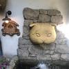 時間は無制限!猫の可愛さ無限大!吉祥寺の猫カフェ「てまりのおしろ」