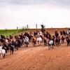アジア最大の山丹軍馬場で駆け回る馬を撮影。中国西北一網打尽旅行(6)