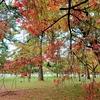 令和元年 紅葉の京都(3)京都御苑 無料・静かで広々・交通至便 穴場です