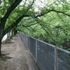 新緑の伝右川・色な場所の思い出・緑7…