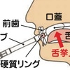 舌圧について