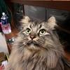 猫の定期健診代は、僕の10倍。
